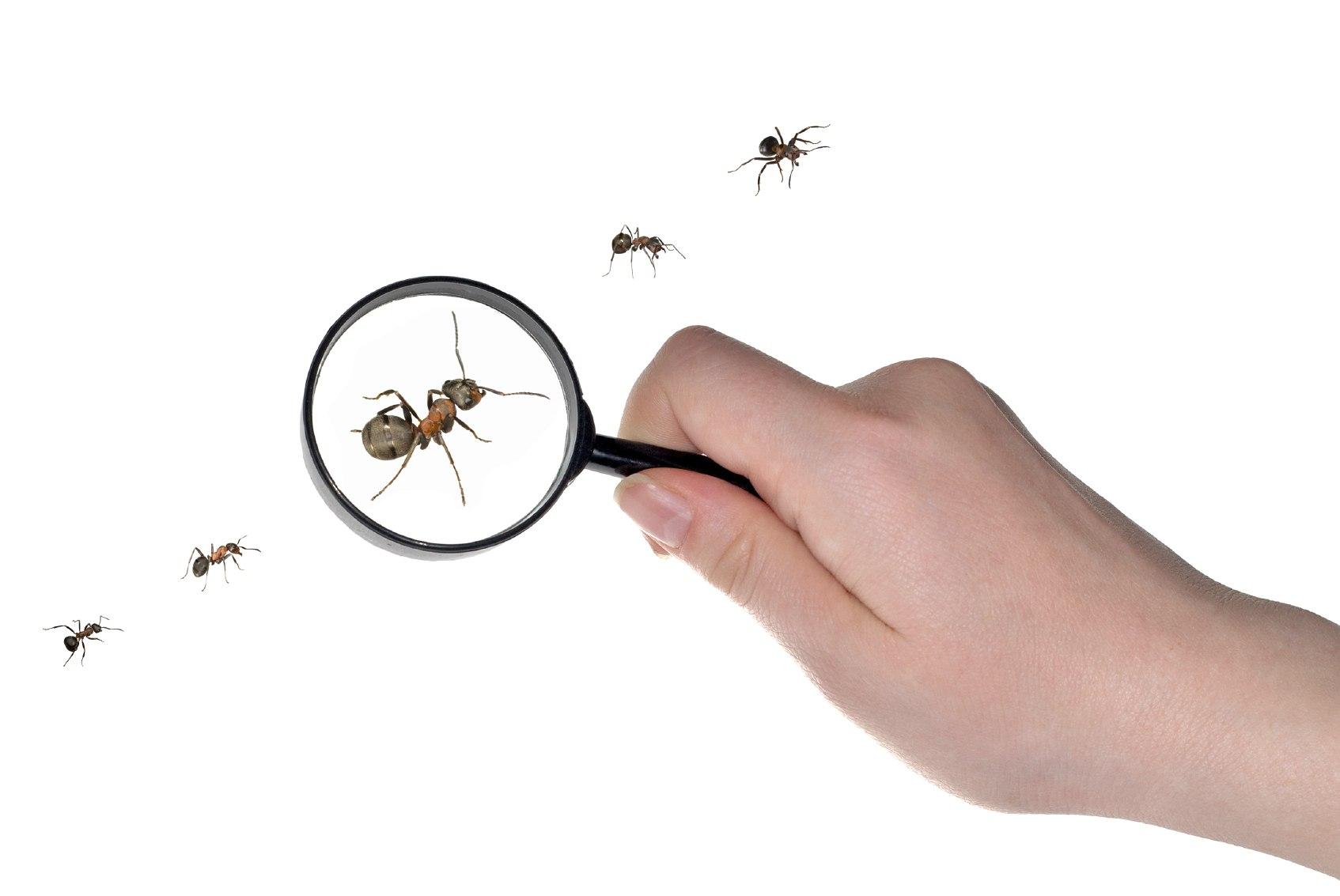 Sugar Ant Control  sc 1 st  Canton Termite And Pest Control & Suger Ant Control | Canton Georgia Termite u0026 Pest Control