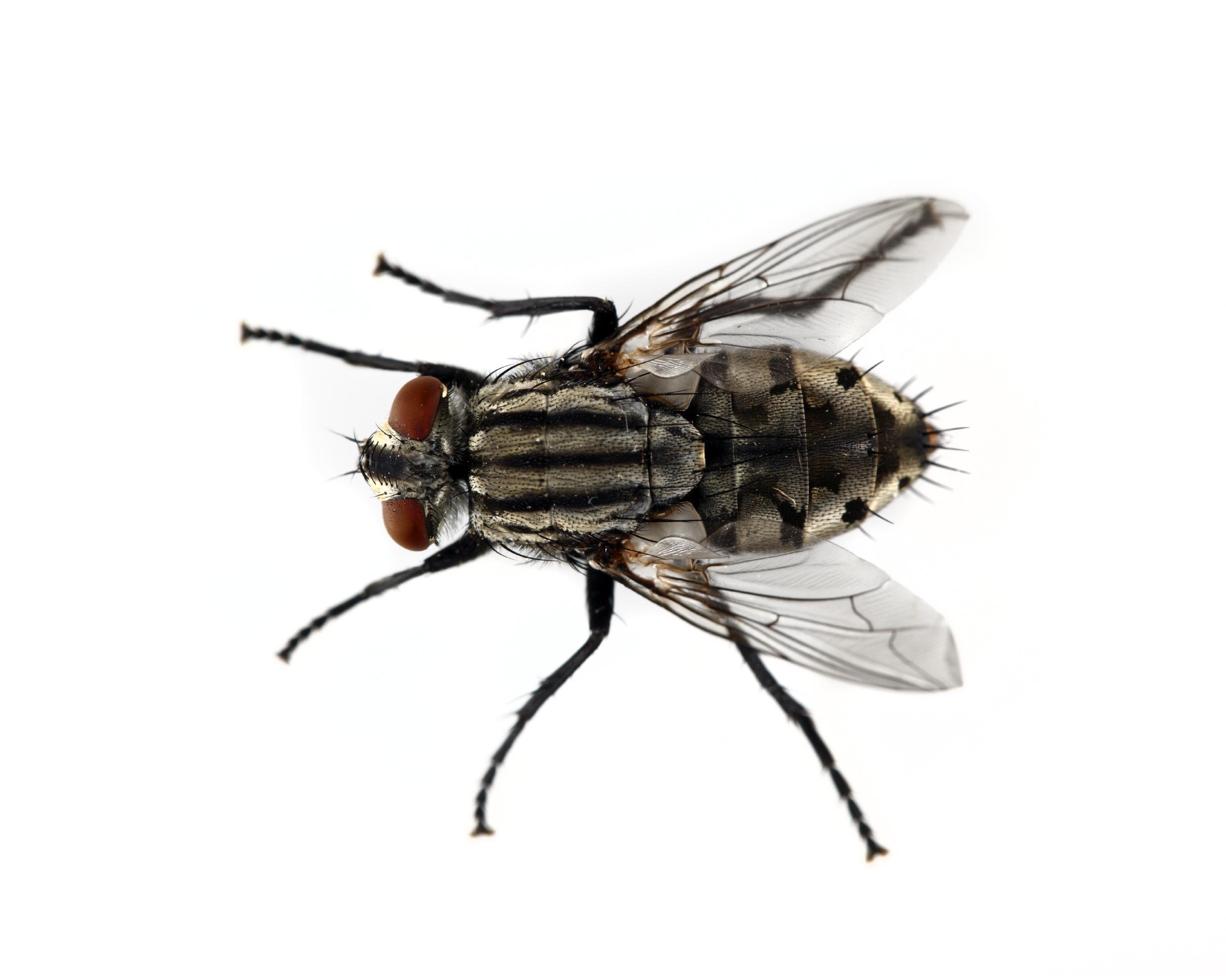 Fly control | Canton Georgia Termite & Pest Control