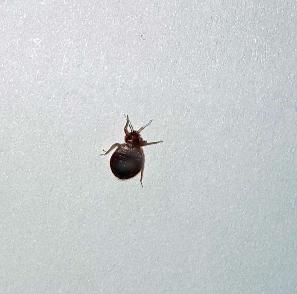 Other places where bed bugs sometimes occur include movie theaters  laundries rental furniture and office buildings. Bugs On Bed Not Bed Bugs   jobs4education com