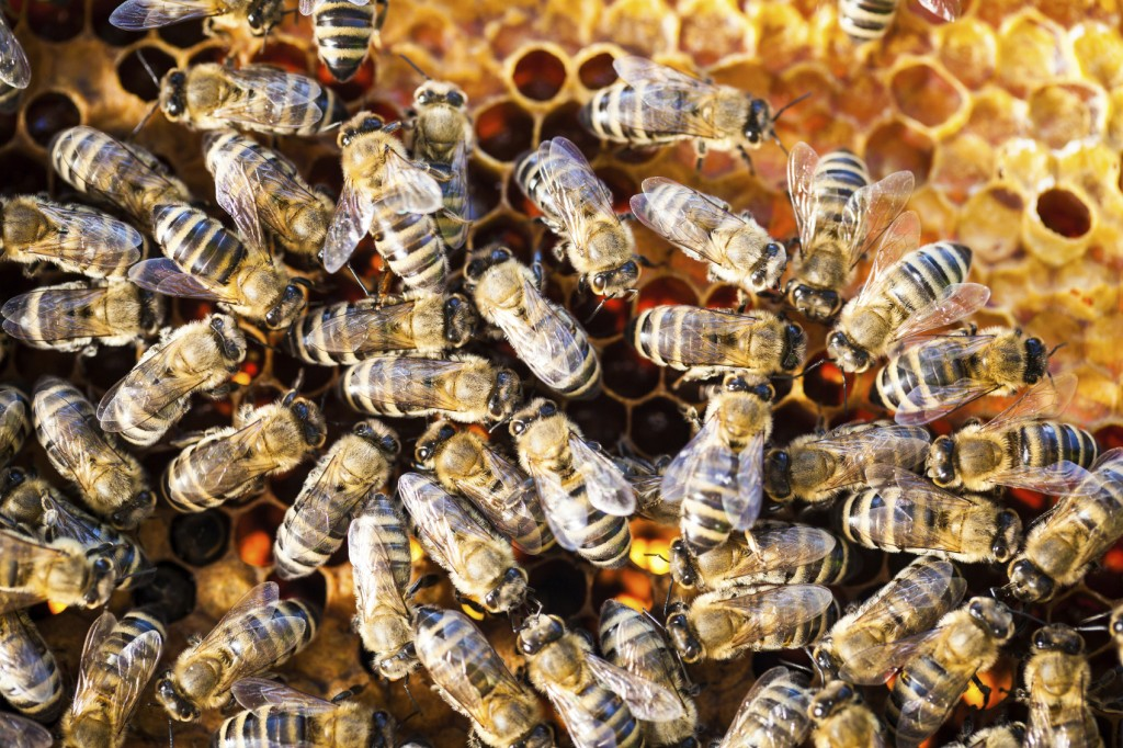 Canton Termite and Pest Control